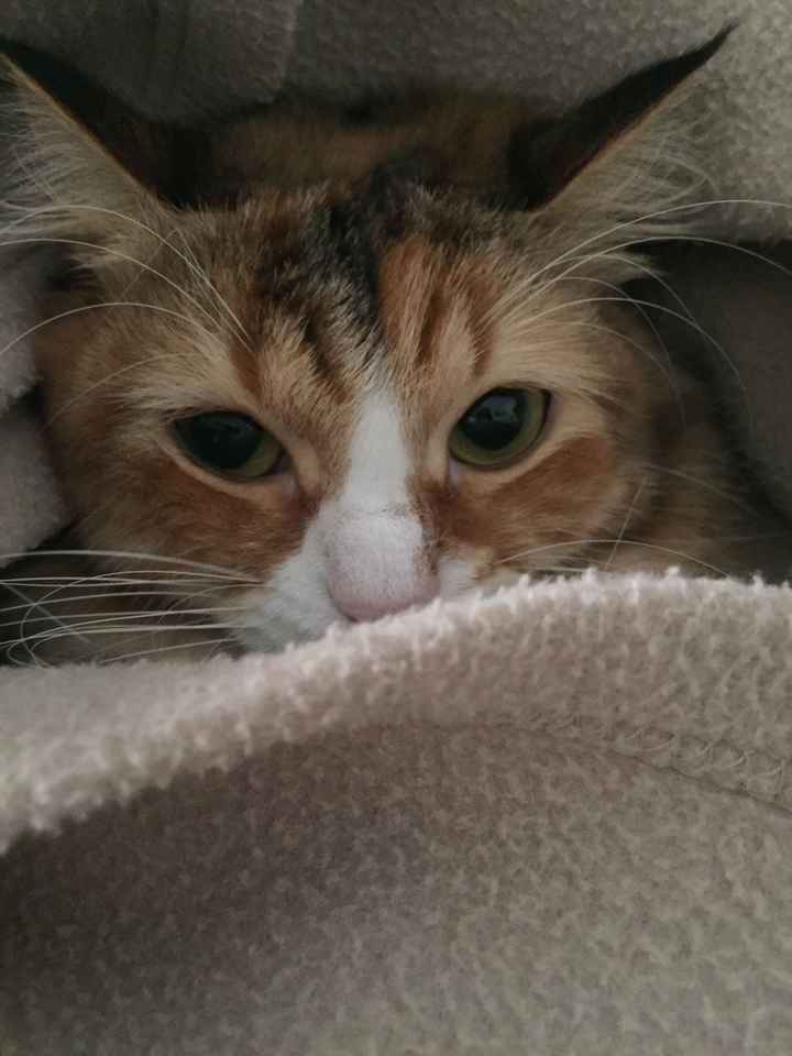 Gatto in casa, non sono immune da toxoplasmosi - 1