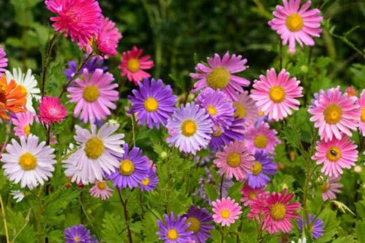 Scelta fiori - 1