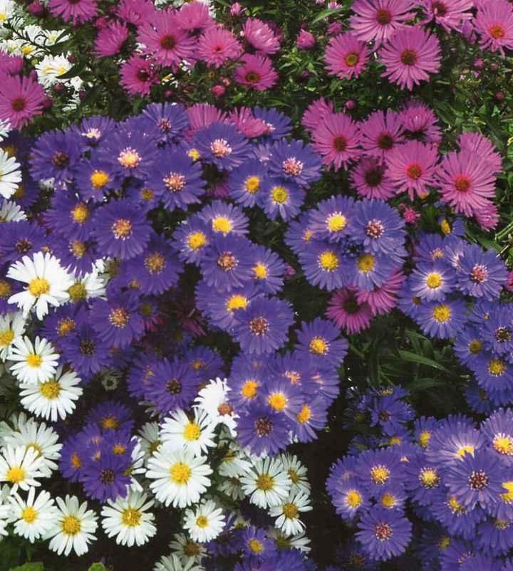 Scelta fiori - 2