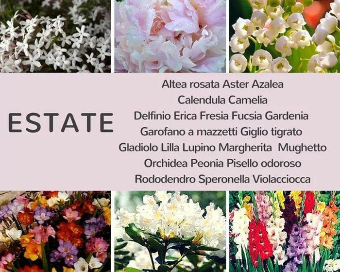 Aiuto bouquet 5