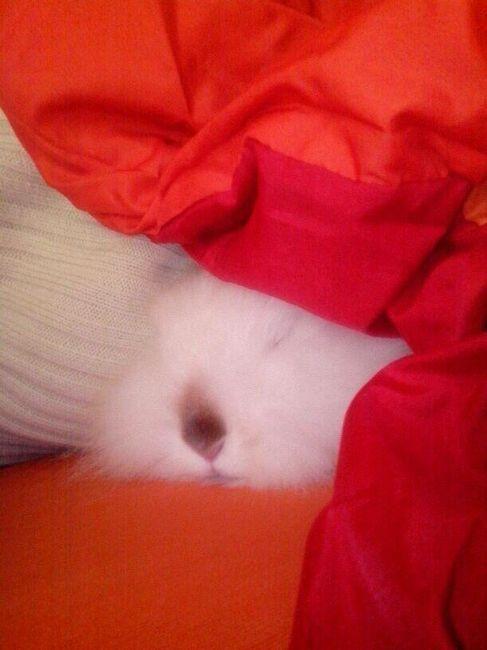 la mia bimba mentre dorme sul divano...