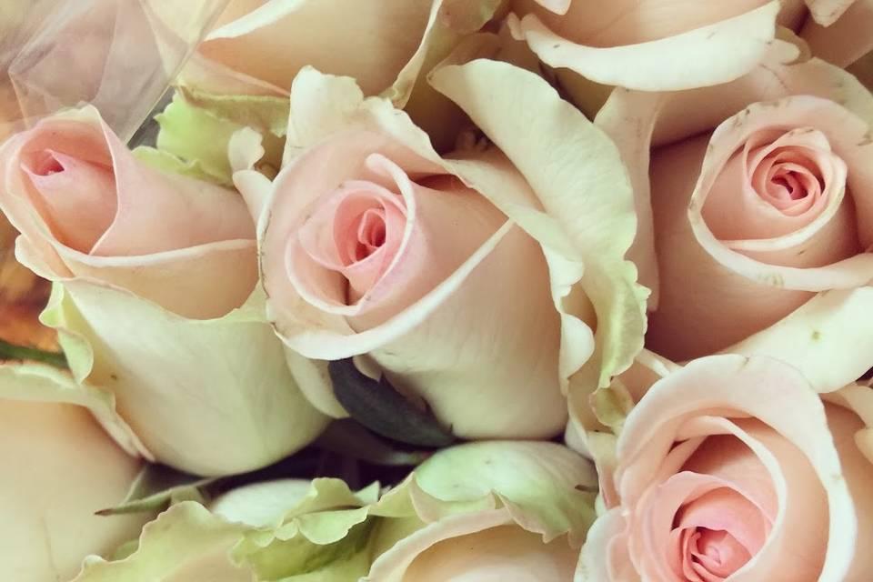 Le Tre Rose