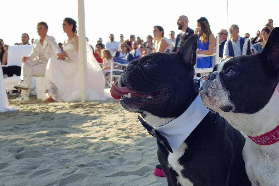 Wedding Bau Service