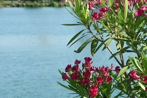 Ristorante Lago Azzurro