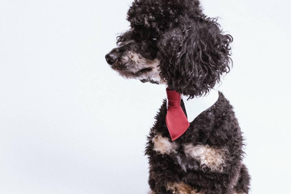 Hart Luxury Pet Brand