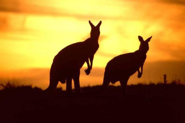 Goditi il panorama australiano