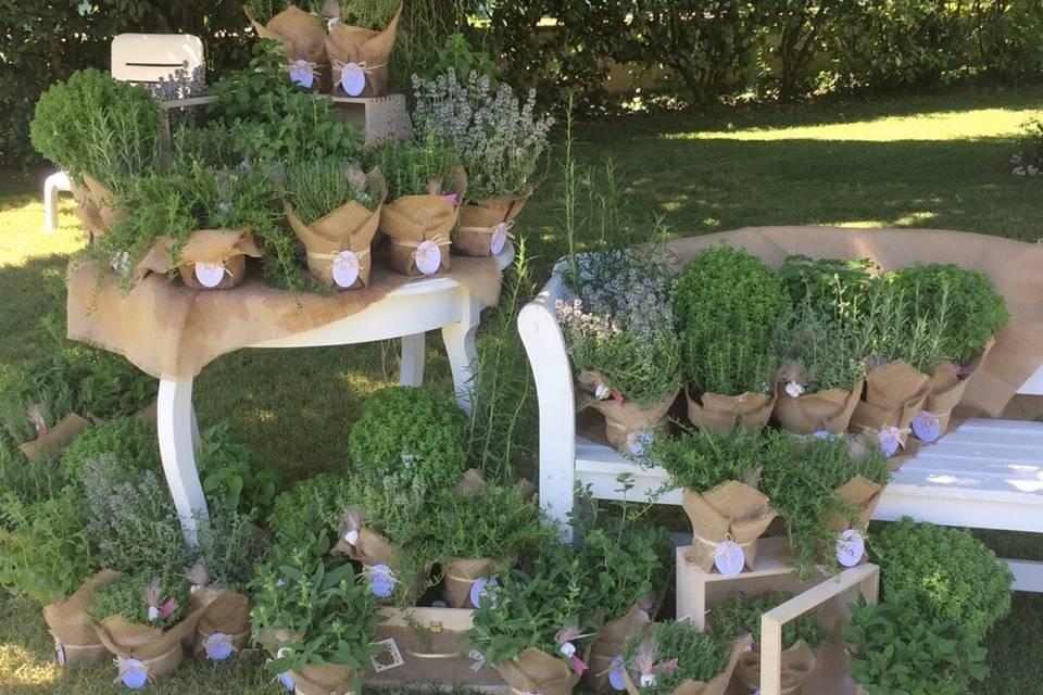 Bomboniere piante aromatiche