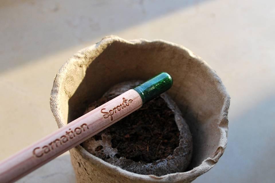 Bomboniera: matite piantabili