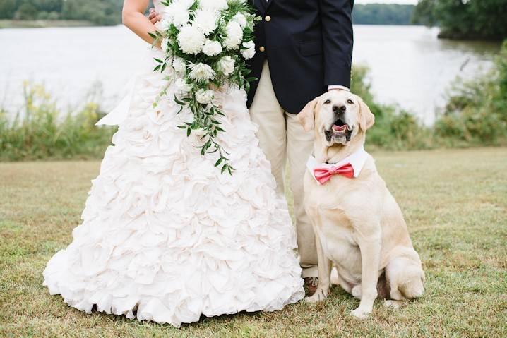 Dog Passion - Wedding dog sitter